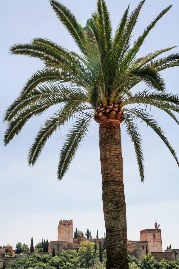 Alhambra und Palme stockfoto