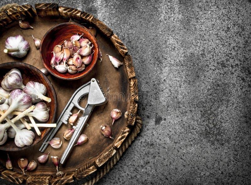 Alho fresco em umas bacias com uma ferramenta da imprensa em uma bandeja de madeira fotos de stock