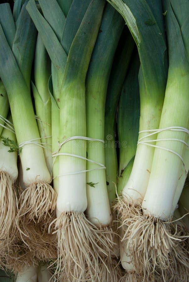 Alho-porros orgânicos fotos de stock
