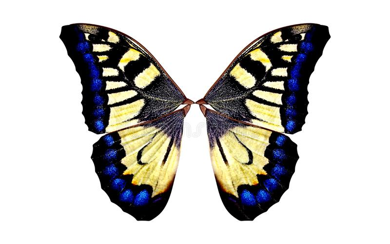 Ali dell'insetto con il percorso di ritaglio immagini stock