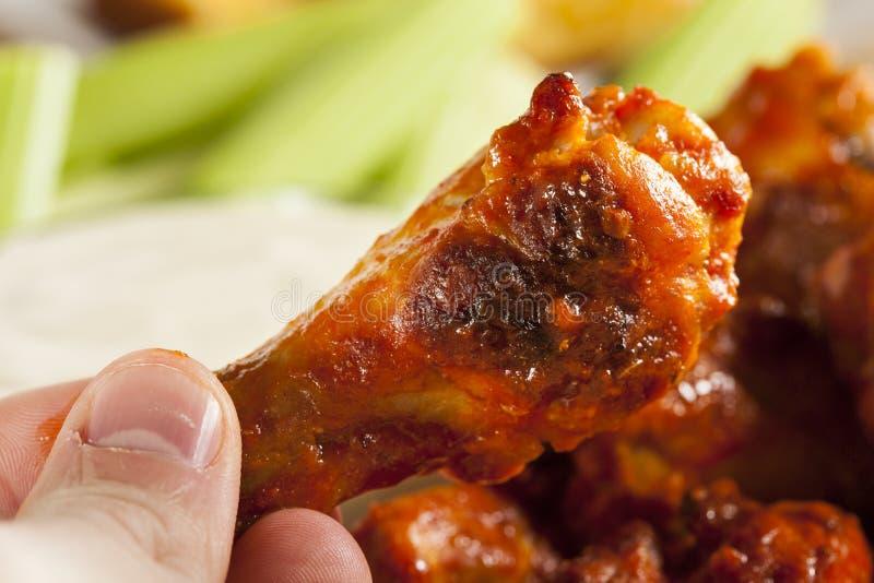 Ali di Spicey e calde della Buffalo di pollo fotografie stock libere da diritti