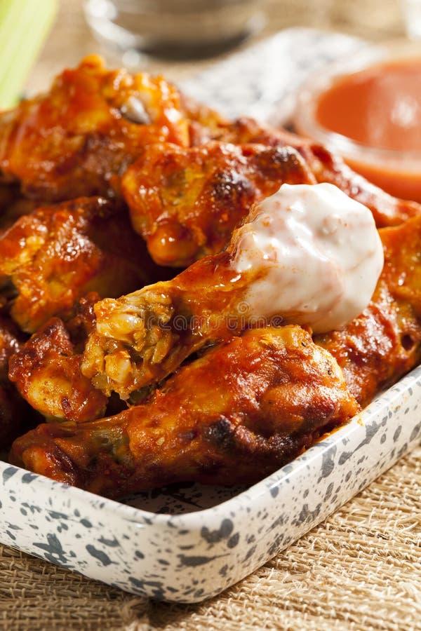 Ali di Spicey e calde della Buffalo di pollo immagini stock