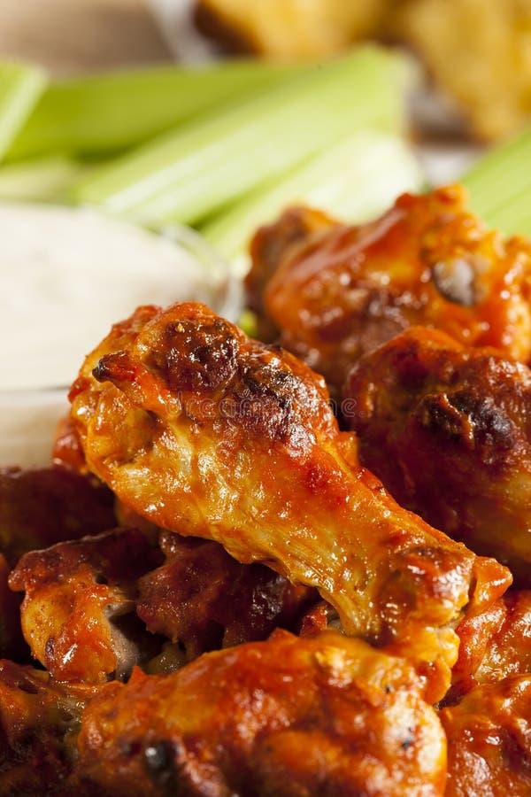 Ali di Spicey e calde della Buffalo di pollo fotografia stock