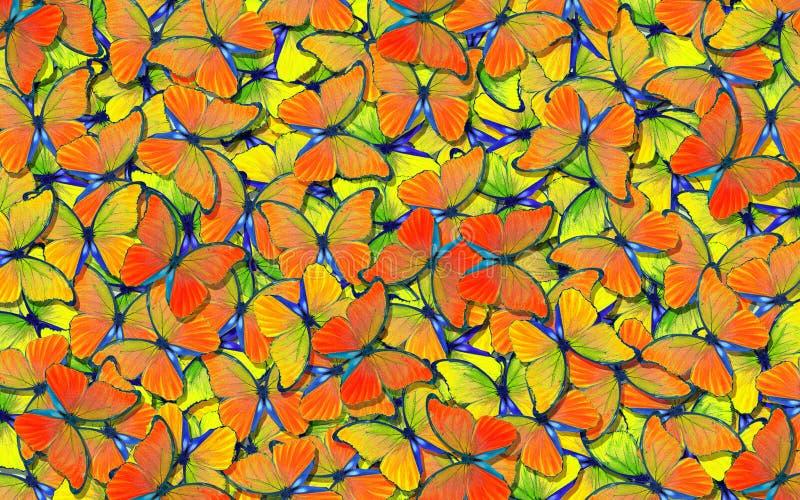 Ali di una farfalla Morpho Volo del fondo astratto luminoso delle farfalle arancio e blu immagine stock libera da diritti