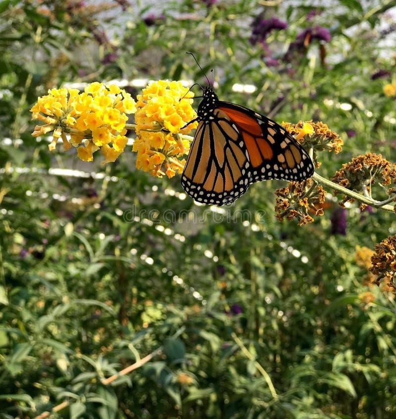 Ali modellate della farfalla fotografia stock