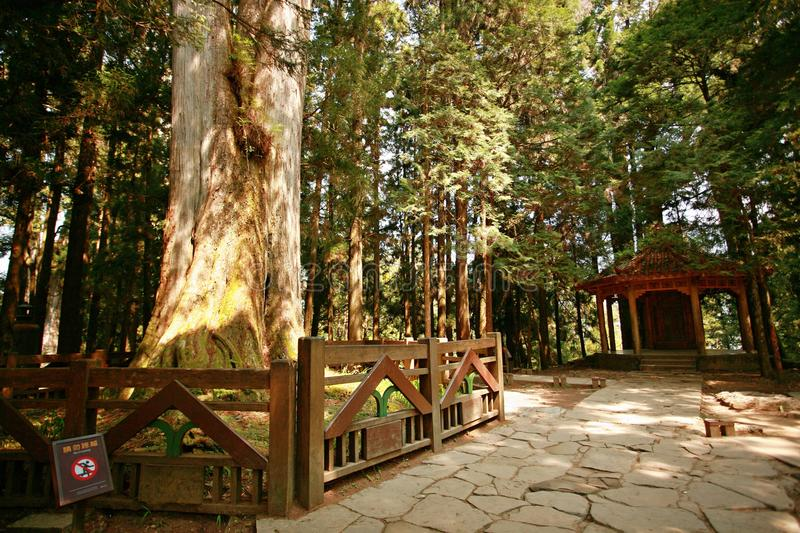 Alishan. Ali Mountain, located in the east of Chiayi, Taiwan Province, 75 kilometers east, is located at an altitude of 2216 meters, the coordinates of the north stock images