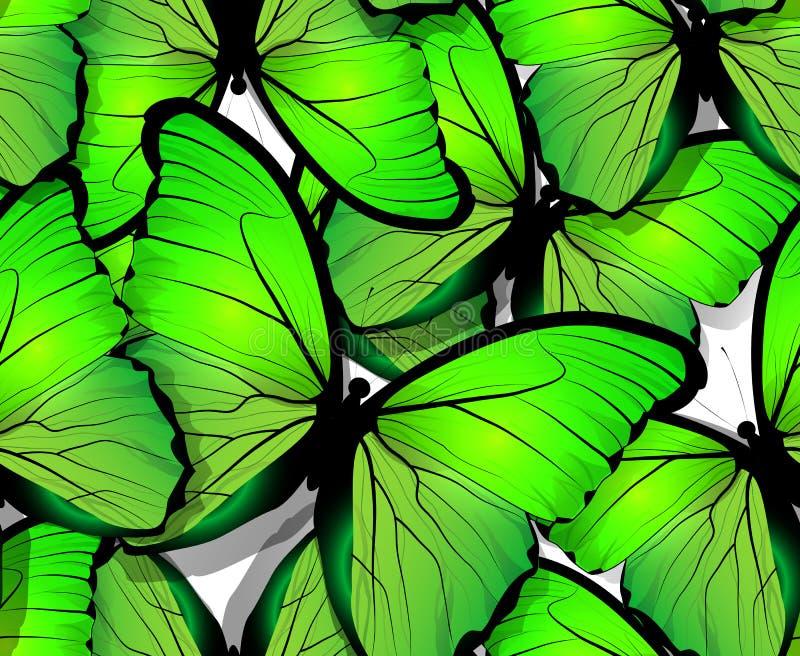 Ali senza cuciture del modello di farfalla su bianco illustrazione vettoriale