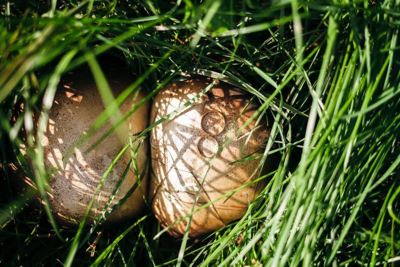 Aliança de casamento em cogumelos imagens de stock
