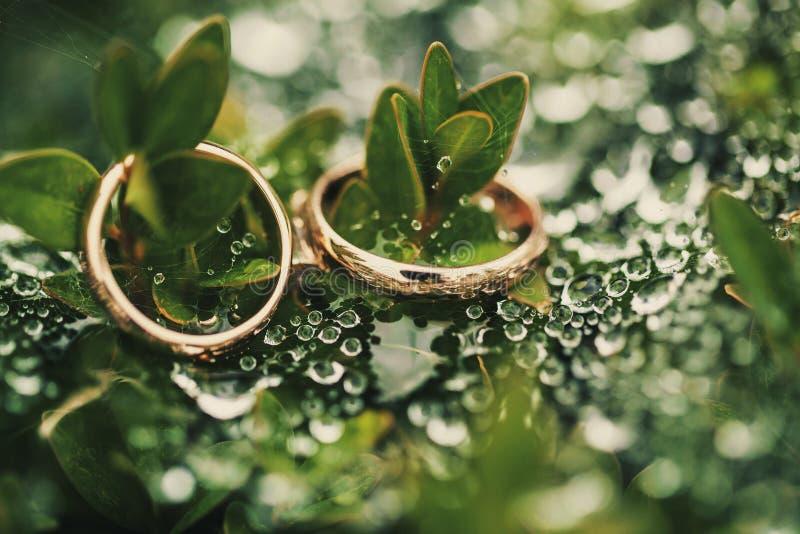 Aliança de casamento no verde fotos de stock