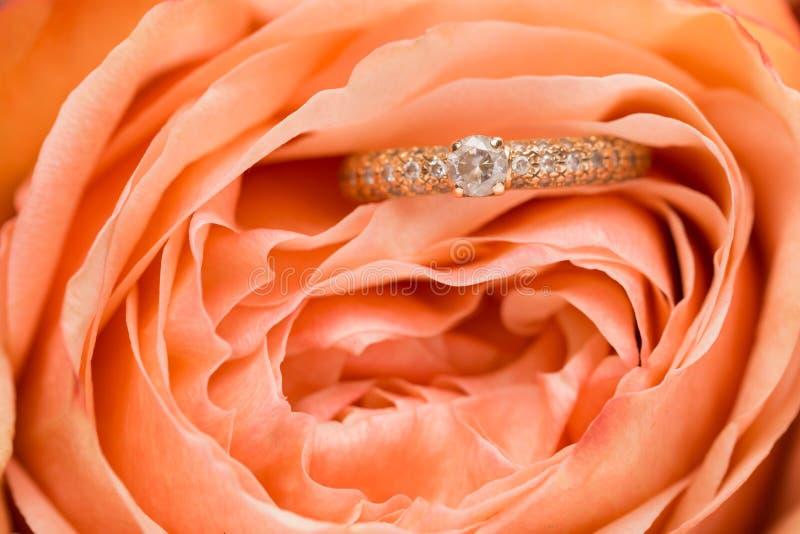 Alianças de casamento com rosa cor-de-rosa imagem de stock royalty free