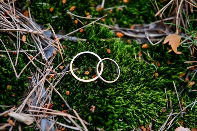 Alianças de casamento da platina no musgo verde imagem de stock royalty free