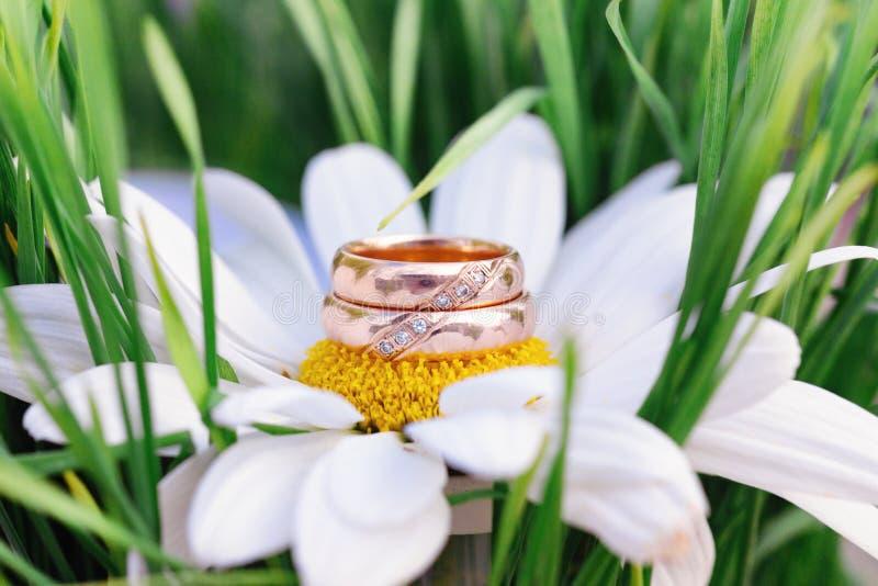 Alianças de casamento macro na camomila fotografia de stock