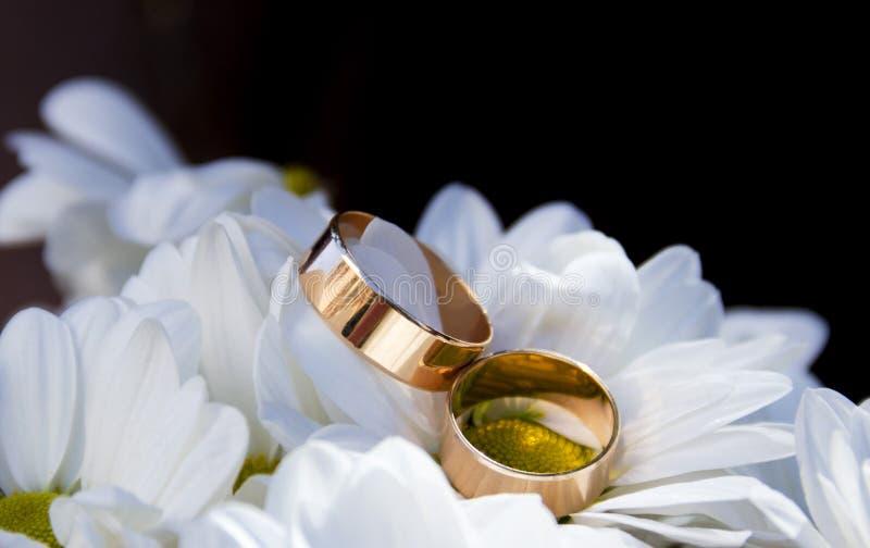 Alianças de casamento nas flores da camomila imagem de stock royalty free