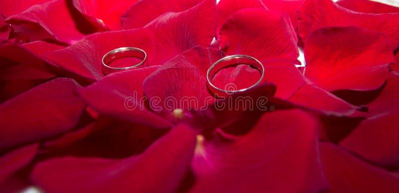 Alianças de casamento nas pétalas cor-de-rosa vermelhas fotos de stock royalty free