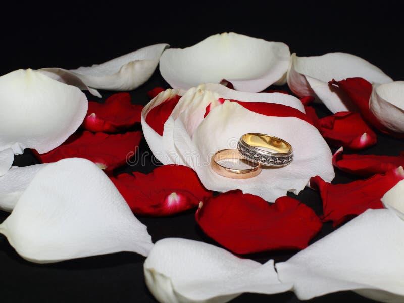 """Alian?as de casamento nas p?talas das rosas brancas e vermelhas no fundo preto Família do †simbólico do conceito"""", amor, casame imagem de stock royalty free"""