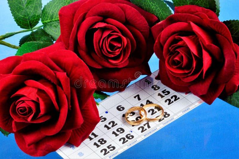 Alianças de casamento no calendário e nas rosas Escolha do planeamento- do casamento da data da celebração, cerimônia da família, fotos de stock royalty free