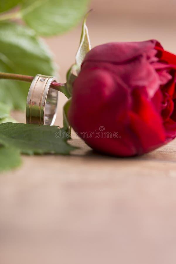 Alianza de boda romántica en una sola rosa del rojo imagenes de archivo