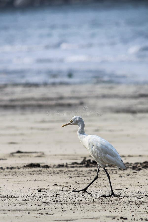 Alibag för sikt för landskap för havsfågel royaltyfria bilder