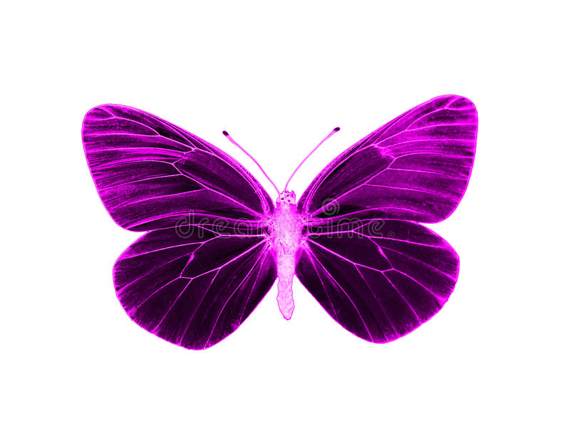 Alien butterfly. Colorful and crisp image of alien butterfly stock photography