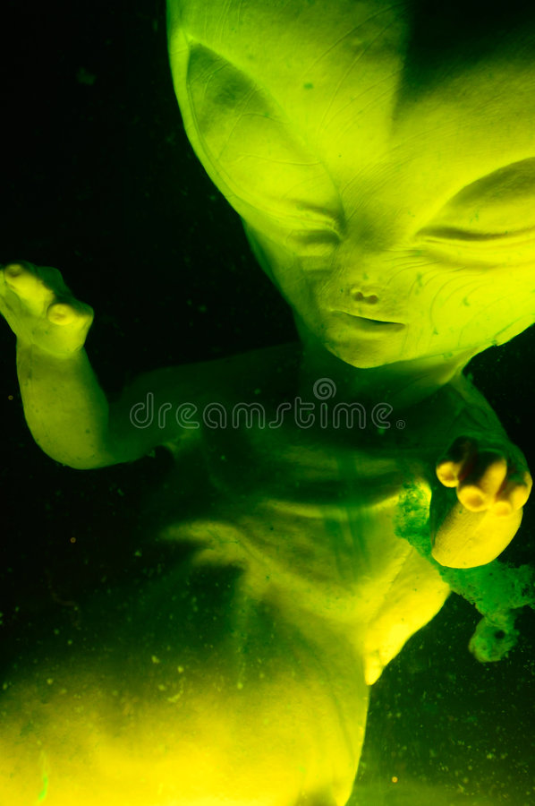 Alien Fetus. Suspended in fluid royalty free stock images