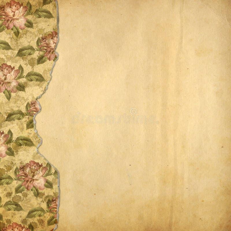 Alienujący album dla fotografii z malować różami zdjęcia royalty free