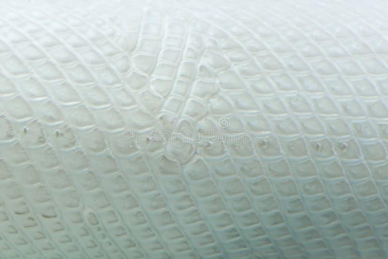 Aligator platyny ryby skóry piękny tecture dla tła fotografia royalty free