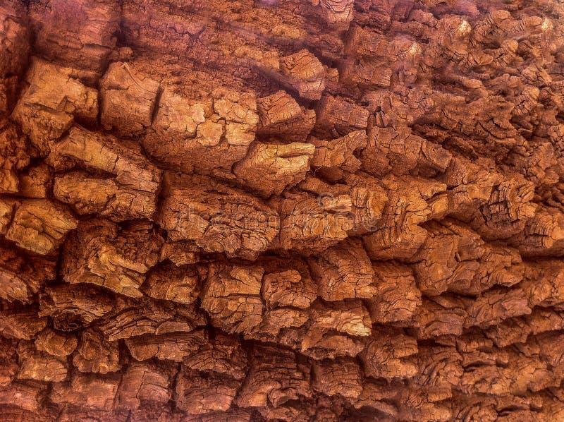 aligere la textura natural corteza de árbol marrón imagenes de archivo