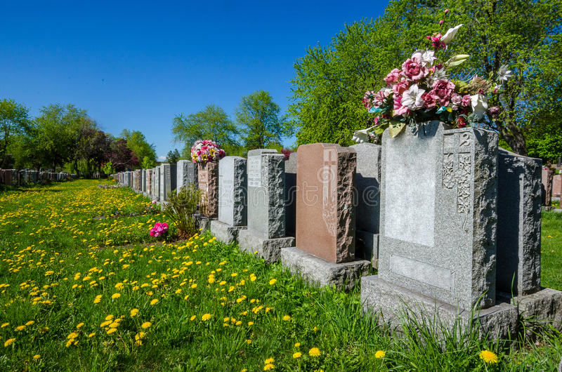 Aligned headstones in a cemetary. With dandelions on the ground royalty free stock photo