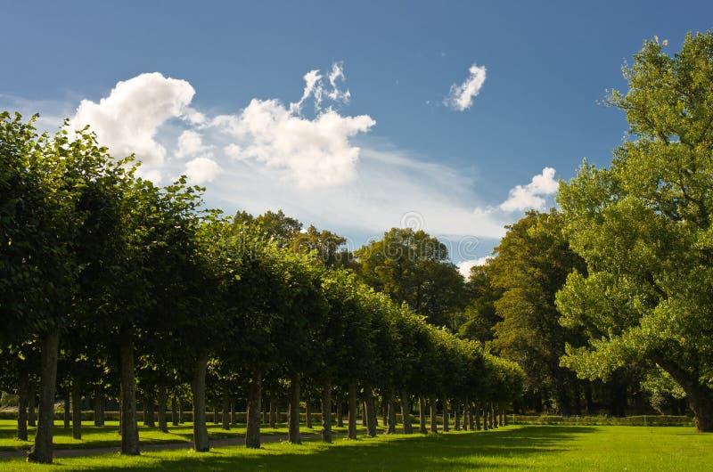 Alignement das árvores imagens de stock royalty free