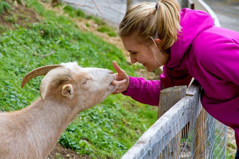 Alimentação da jovem mulher uma cabra imagens de stock