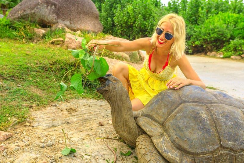 Alimentação da tartaruga gigante fotografia de stock royalty free