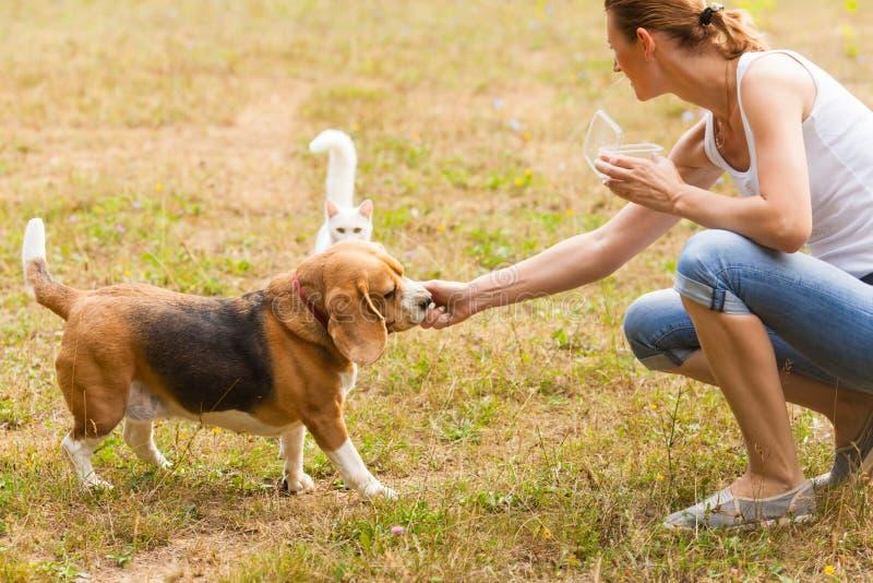 Alimentação do cão e gato exterior no verão foto de stock
