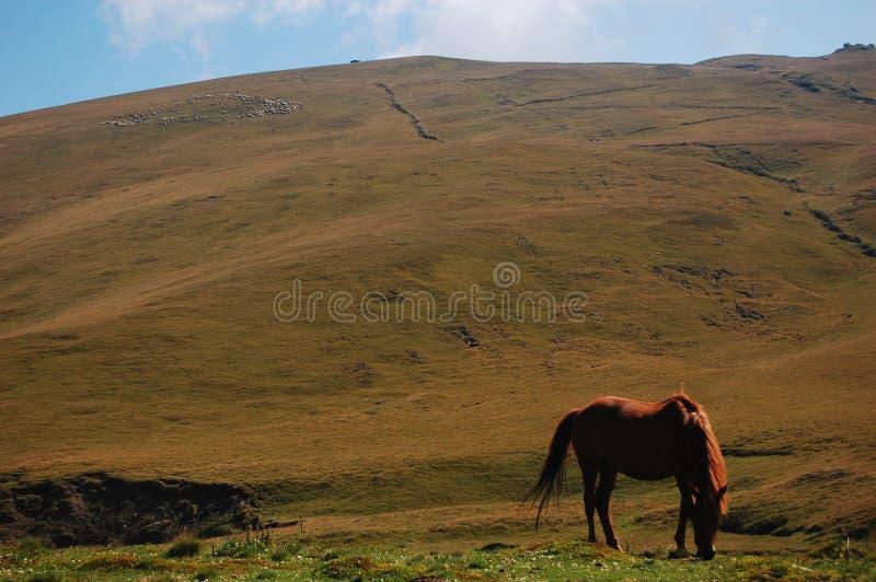 Alimentação do cavalo imagens de stock royalty free