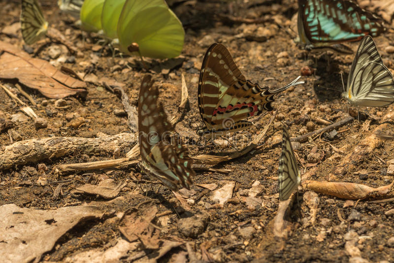 Alimentación de las mariposas imagen de archivo
