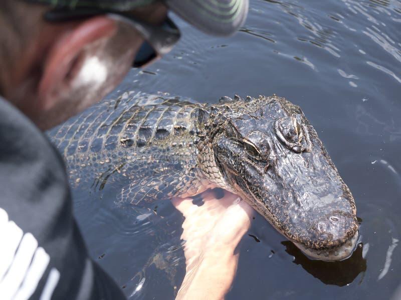 Alimentación de un cocodrilo en un viaje del barco del pantano de los pantanos fuera de New Orleans en Luisiana los E.E.U.U. foto de archivo