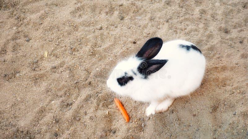 Alimentación de un poco de comida al conejo foto de archivo libre de regalías