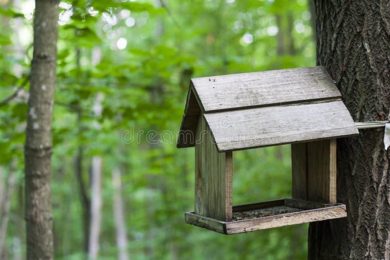 Alimentador, aviário em uma árvore nas madeiras ou parque fotografia de stock