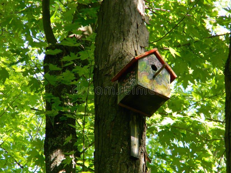 Alimentador bonito do pássaro na floresta da manhã foto de stock