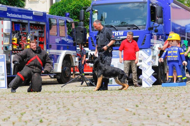 Alimentador de cão alemão da polícia com um cão pastor da polícia imagens de stock royalty free