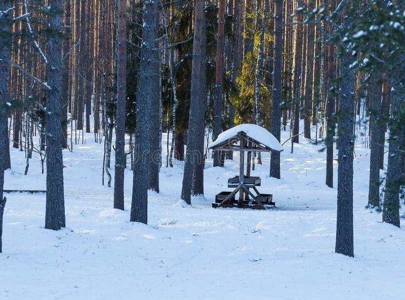 Alimentador de los ciervos en el bosque del invierno fotos de archivo libres de regalías