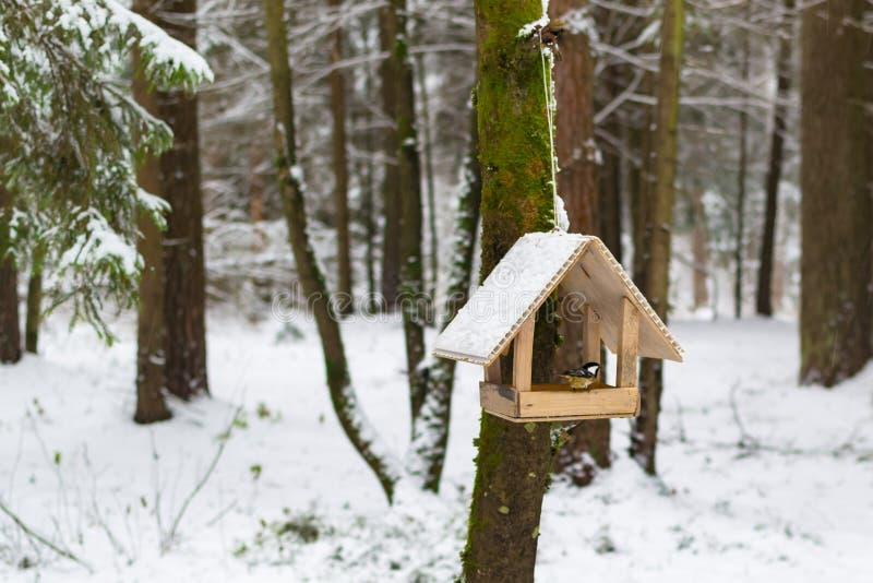 Alimentador del pájaro del invierno fotos de archivo libres de regalías