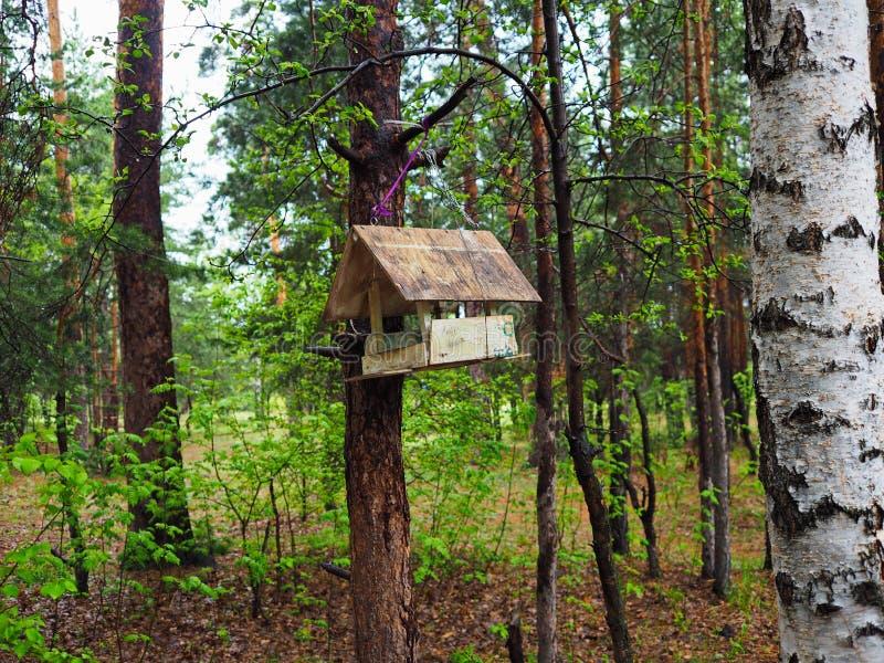 Alimentador do pássaro nas madeiras imagem de stock royalty free