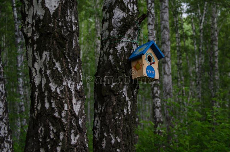 Alimentador do pássaro para pássaros da floresta Cuidado da natureza fotografia de stock