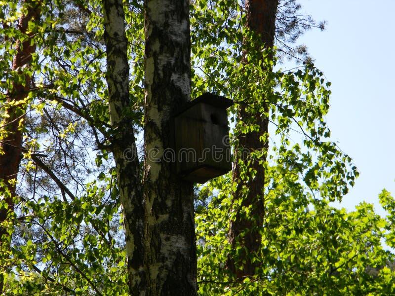 Alimentador hermoso del pájaro en el bosque de la mañana foto de archivo libre de regalías