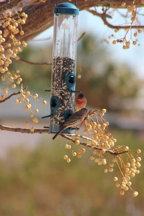 Alimentador II del pájaro imágenes de archivo libres de regalías