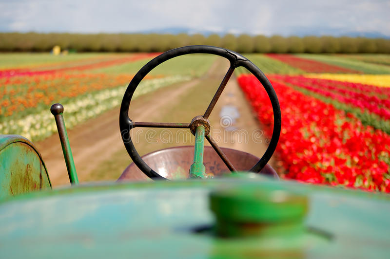 Alimentador viejo en campo del tulipán fotografía de archivo libre de regalías