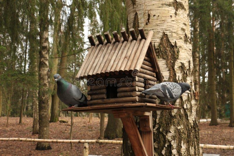 Alimentadores del pájaro fotografía de archivo