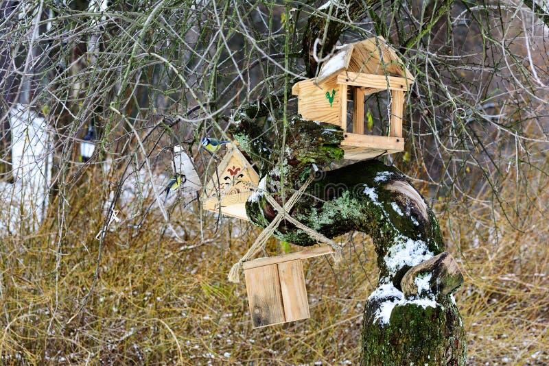 Alimentadores do pássaro foto de stock royalty free