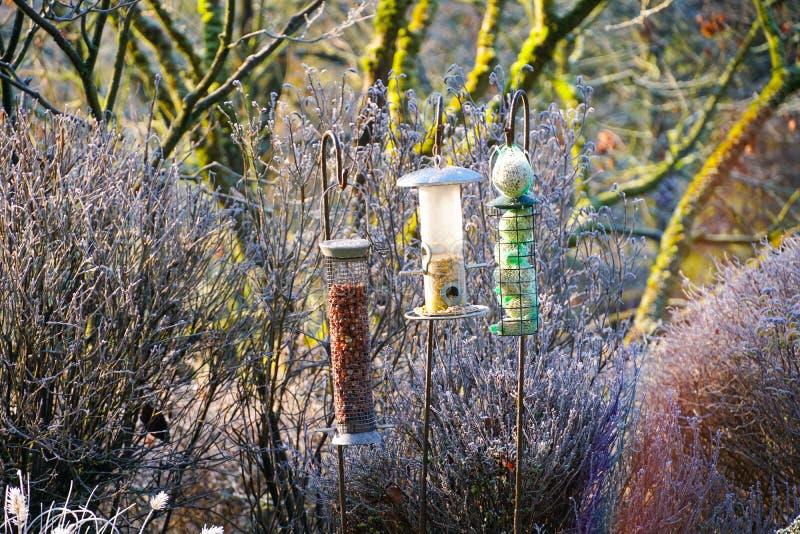 Alimentadores do pássaro com as sementes misturadas no jardim bonito durante o inverno congelado fotografia de stock