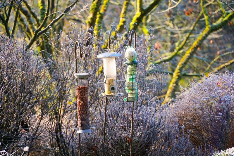 Alimentadores do pássaro com as sementes misturadas no jardim bonito durante o inverno congelado fotos de stock